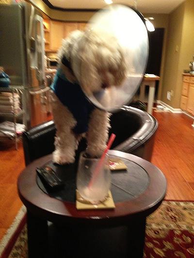 Max trying to find leftover Cadbury Creme Egg Milkshake