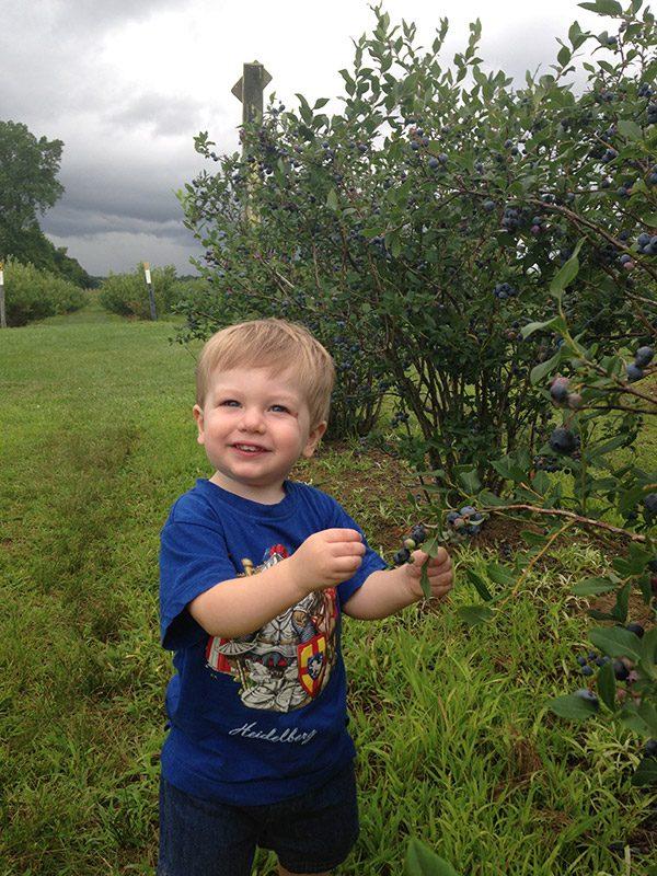 Robbie picking blueberries, summer 2017