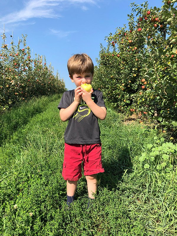 Robbie eating apples