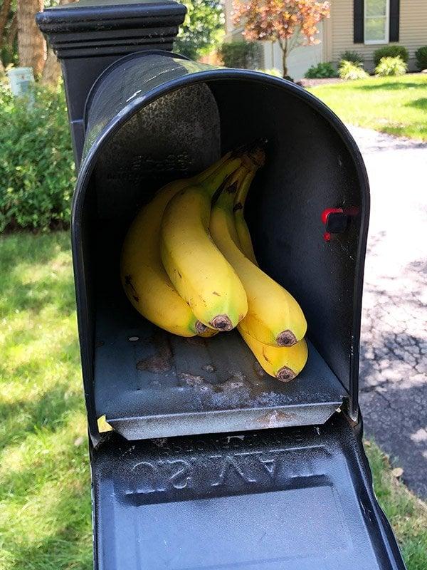 Bananas in Mailbox!